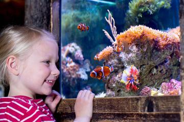SEA LIFE Minnesota Aquarium at the...