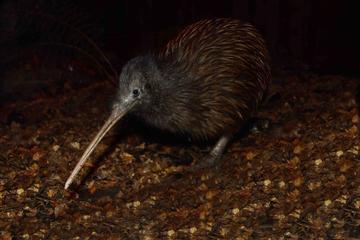 Entrada para o Parque Kiwi Birdlife