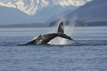 Isländisches Reiten und Walbeobachtung ab Reykjavik