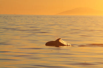 Reykjavik: Bootstour zur Walbeobachtung in der Mitternachtssonne
