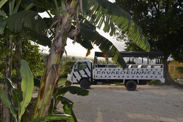 Dominican Republic Countryside Safari...