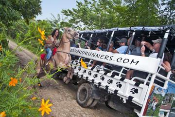 Excursão de Safari para a Zona Rural da república Dominicana saindo...