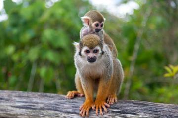 Monkeyland and Plantation Safari from La Romana