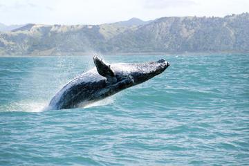 Observação de baleias e viagem de um...
