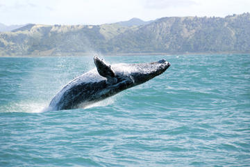 Whale Watching und Bacardi Island...