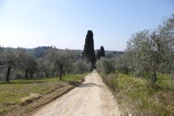Chianti Hiking Tour with Wine Tasting