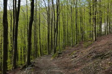 Escursione sulle colline fiorentine