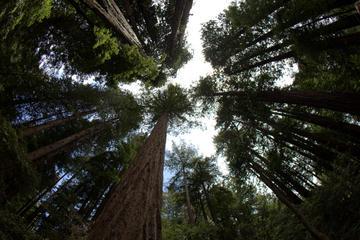 Excursión combinada: Muir Woods...