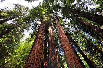 Muir Woods and Sausalito Tour Afternoon Tour