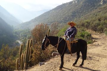 Tour a caballo en los Andes desde...