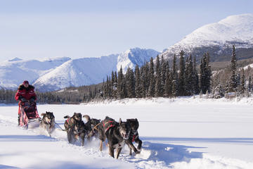 Day Trip 5-Day Active Winter Adventure in Yukon near Whitehorse, Canada
