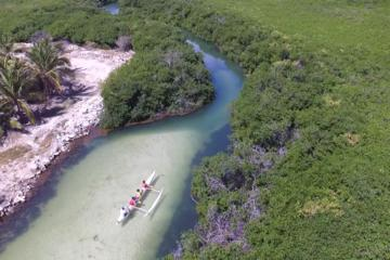 Mangrove Kayak Ecotour from Galion...