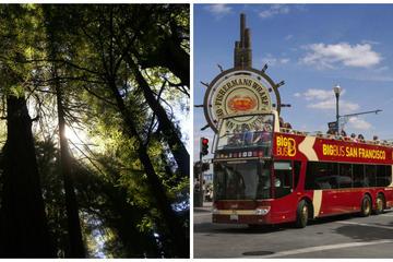 Besuch der Küstenmammutbäume auf der Hop-on-Hop-off-Tour durch San...