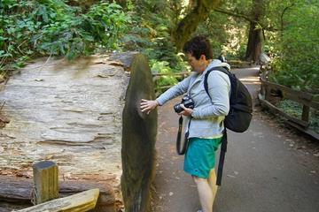 Coastal Redwoods Visit with San Francisco Hop-On Hop-Off Tour