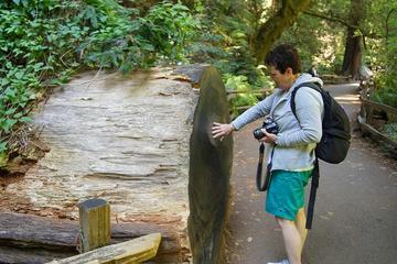 Erkunden Sie die kalifornischen Küstenmammutbäume mit einem...