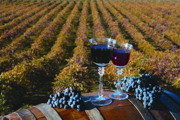 Excursion d'une journée dans le nec plus ultra des amateurs de vins à...