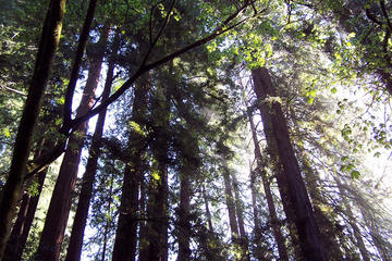 Nature Wildlife Package to California's Redwoods with Aquarium and ...