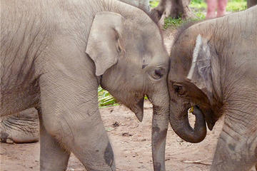 Chiang Mai: 1-Day Elephant Nature...
