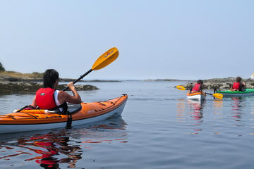 Victoria Oak Bay Shoreline Kayak Tour