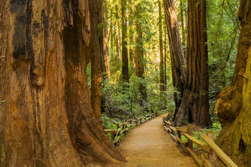 Tour nach Muir Woods und Sausalito im Hop-on-Hop-off-Bus