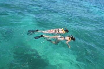 Nassau Reef Snorkeling Adventure