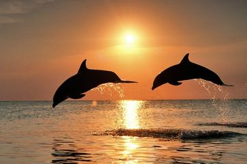 Full-Day Tour with Dolphin Watching