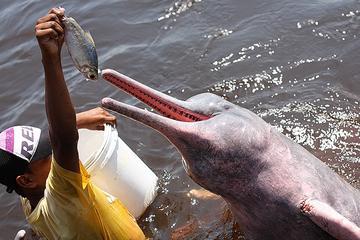 Combo de excursão: natação com os golfinhos, visita a uma aldeia...