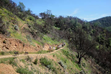 Half Day Horseback Riding from valparaiso
