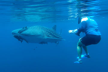 Journey to the Sea of Cortez and Whale Sharks