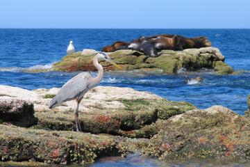 Marine Life Adventure from La Paz