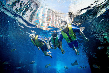 Dubai Atlantis Ultimate Snorkel...