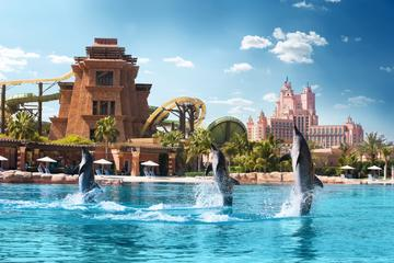 Erlebnis mit den Delfinen im Atlantis The Palm in Dubai