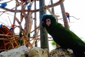 National Aviary Private Tour