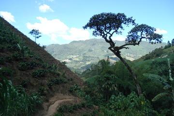 Visite privée: découverte du café de Medellín et atelier