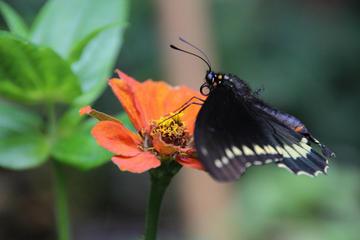 Visite privée: Foire aux fleurs de Medellín à Santa Elena