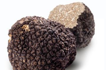 Chasse aux truffes et déjeuner gastronomique à base de truffes au...
