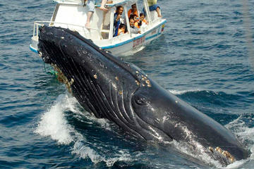 Tour de avistamiento de ballenas en...