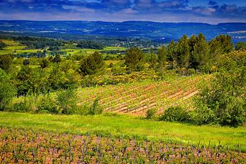 Forfait 1jour: visite du vignoble...