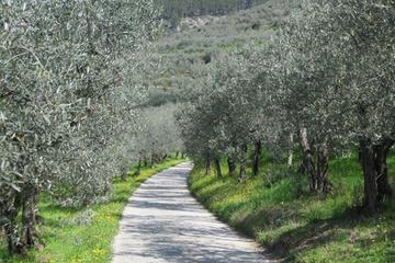 Bike and Wine day tour from Assisi to Spello Cycling Culture and wine-tasting lunch
