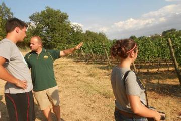 Emotional Winery and Oil mill Tour in Montefalco