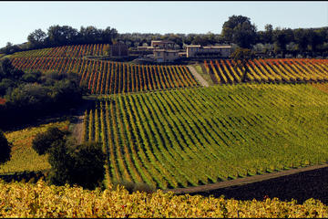Private Full-day Umbria Wine Experience from Assisi