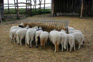 Tour da Fazenda com degustação de...