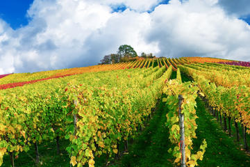French Champagne Tour from Paris with