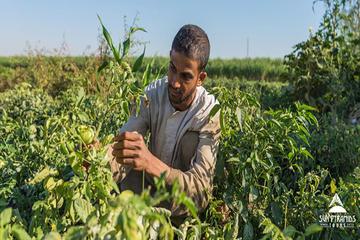 Å ha frokost på Green Farm i Egypt