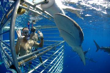 Plongée en cage parmi les requins à Oahu