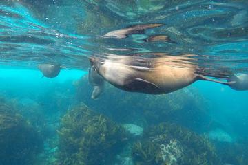 3 Day Safari Camp - Freycinet and Tasman Peninsula - Walking tour