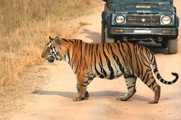 5-Hour Tiger Safari to Panna National...