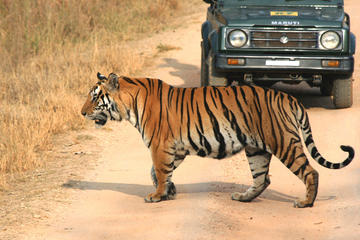 Private Tiger Safari to Panna...