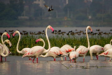 Private Tour: Full-Day Bird Safari...