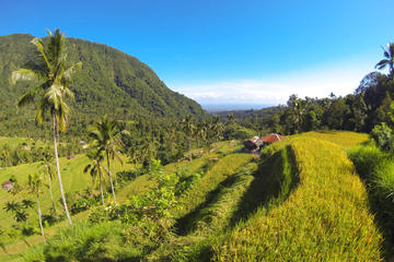Bali Day Tour of Sunrise Watch at Kintamani, Lemukih Rice Field and...